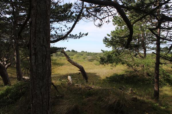 Bomen en natuur Schiermonnikoog